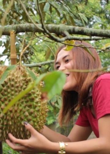 400 Buah Durian Siap, Festival Makan Duren Siap, ke Tajun Siap Graaak…