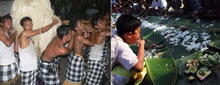 Tradisi Perang Jempana dan nunas paica di Banjar Panti Timrah, Paksebali, Klungkung. ; Foto: Eni Padma