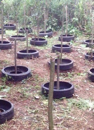 Areal perkebunan di Mupubati Farm, Bangli, milik seorang seniman film. Foto: FB/Dwitra J Ariana