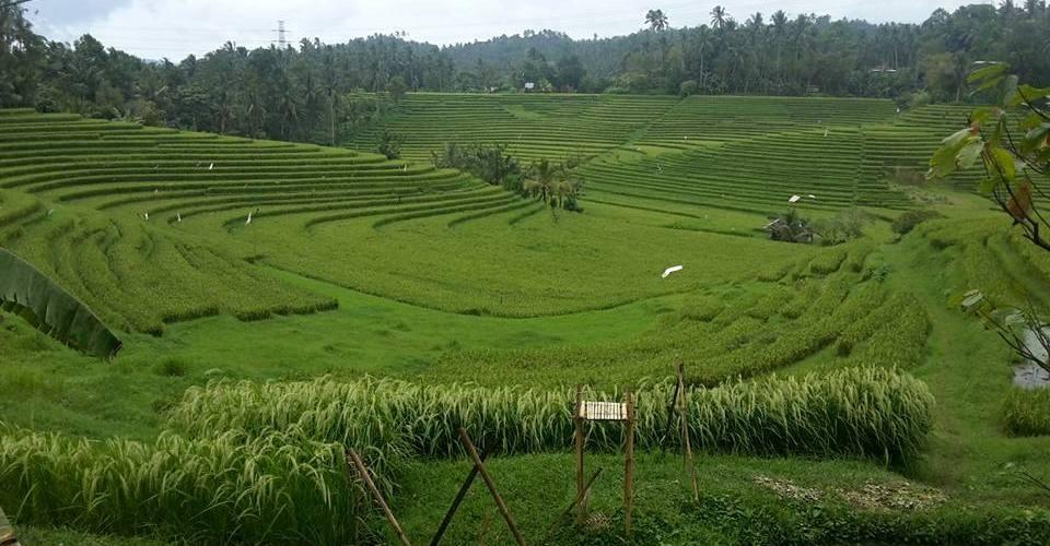 Foto: Agung Putradhyana