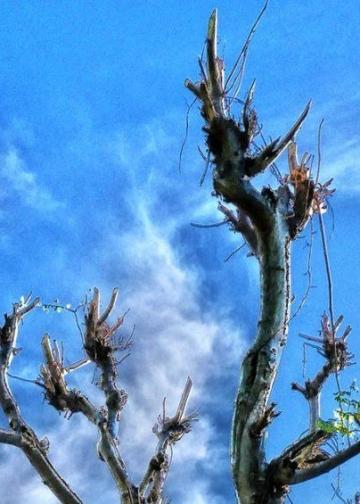Sekar Sumawur: Langit-Langit, Langit dan Lelangit