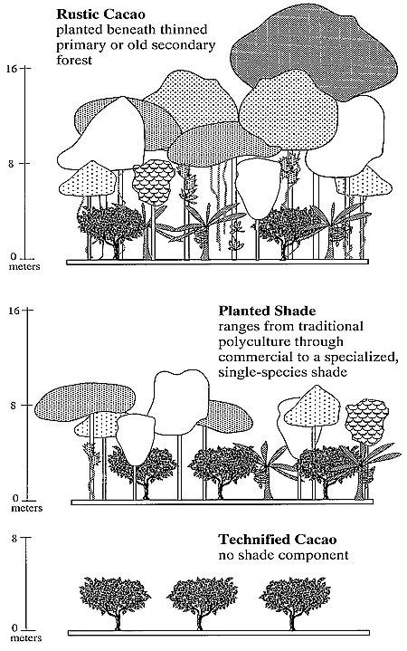 Hasil gambar untuk range of cacao systems extant