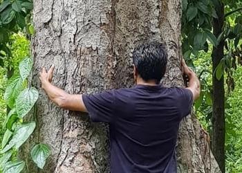 Pohon durian tua di Desa Munduk Bestala, Seririt, Buleleng, Bali